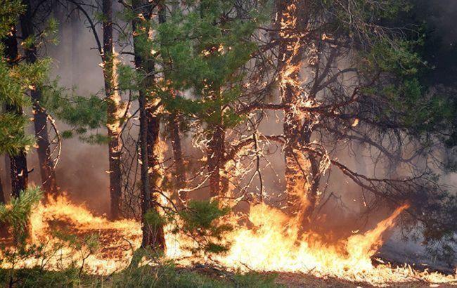 В Луганской области вспыхнул лесной пожар