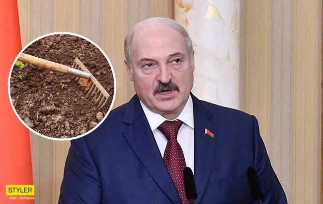 В разгар пандемии: Лукашенко со своей собакой устроил субботник (видео)