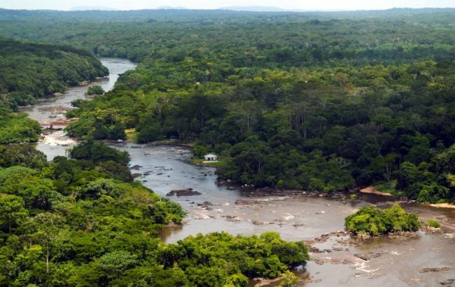 Фото: парк Окапи в Конго (luannecadd.com)