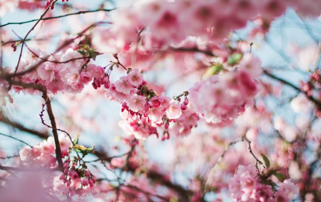 Весна продовжить дивувати: синоптики попередили про нюанси погоди у п'ятницю