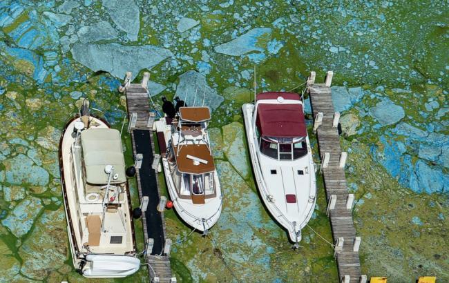 Фото: в американському штаті Флорида оголосили ПП через водорості