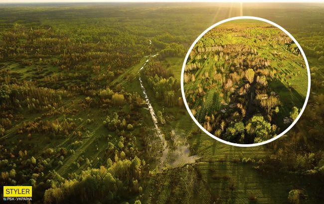 В Чернобыле показали на фото редкую птицу-невидимку: она быстро бегает