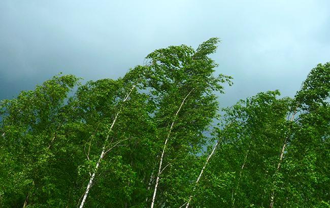 Фото: вітер (Wikimedia Commons)