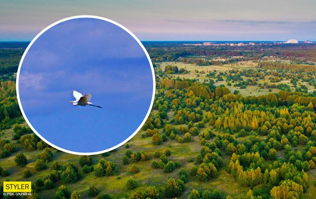 В Чернобыле показали птицу, которая может сгибать шею в трех местах (фото)