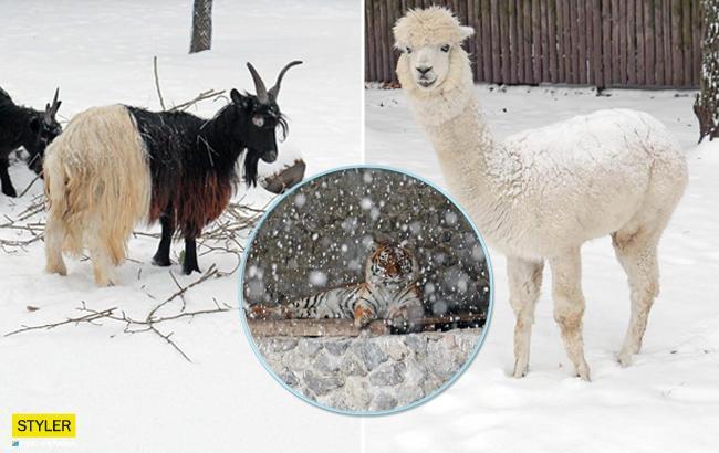 Зимова казка: у мережі показали приголомшливі фото з Київського зоопарку