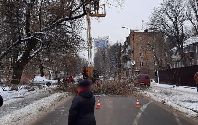 У Києві перекрили рух на одній з вулиць через падіння дерева: як об'їхати