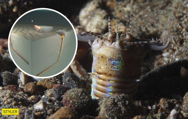Ученые нашли нору гигантского подводного червя, который жил 20 млн лет назад