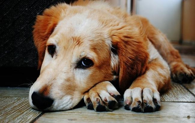 """""""Нет в мире существа, более жестокого, чем человек"""": на Закарпатье изверг убил собаку, повесив на дереве (фото)"""