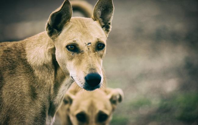 """""""Не осталось ни одного живого места"""": волонтеры просят помочь спасти собаку, пострадавшую от новогодних салютов"""