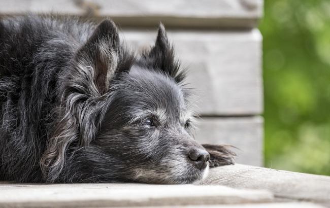 Фото: Собака (pixabay.com/ru/users/medienluemmel)