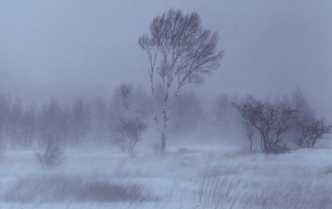 Фото: в Украине ожидается сильный ветер