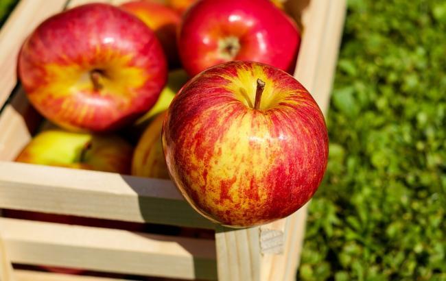 Оксана Скиталинская рассказала, сколько фруктов надо употреблять в день