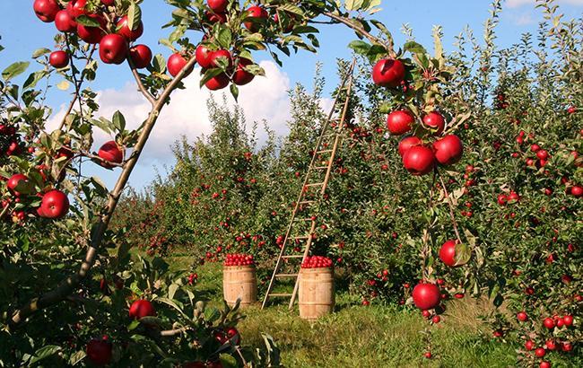 Фото: правительство выделило садоводам дополнительное финансирование (pixabey)