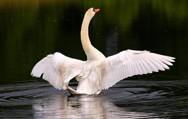 Лебеди-роботы будут следить за качеством воды в Сингапуре