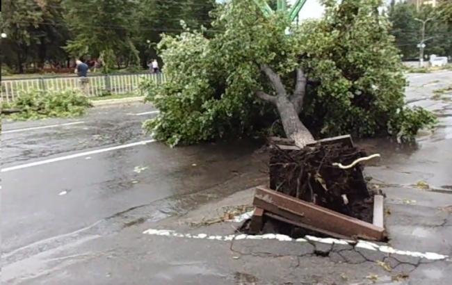 """Результат пошуку зображень за запитом """"повалені дерева"""""""