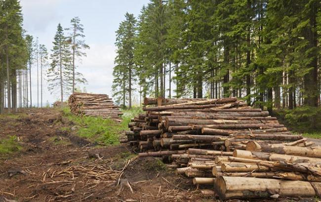 Фото: в Україні збільшилася кількість випадків незаконної вирубки лісу