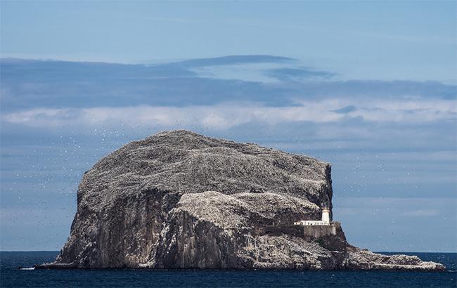 Фото: Остров Басс-Рок в Шотландии (flickr.com-neillwphoto)