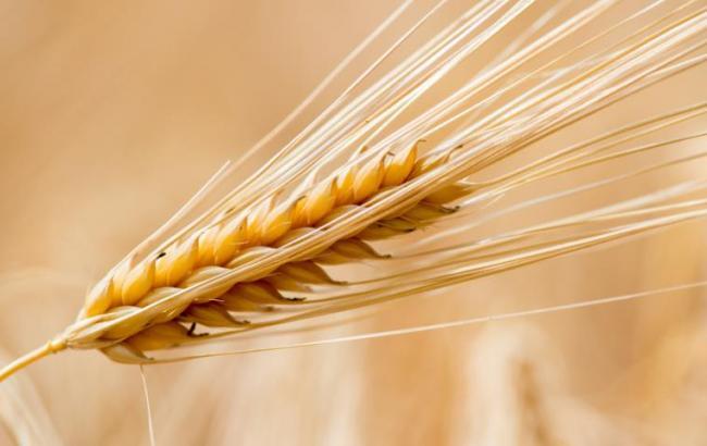 Україна експортувала рекордних 39,1 млн тонн зерна— Мінагрополітики