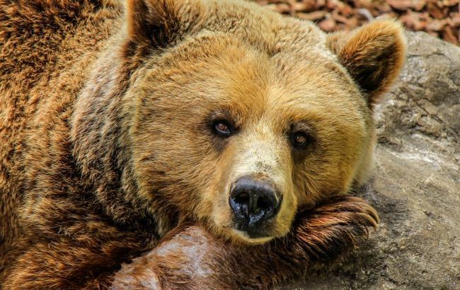 В Запорожье спасают медведицу: дрессировщик поселил животное на автостоянке