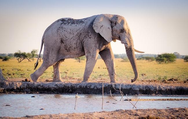 Фото: Слон (unsplash.com/Benjamin Pley)
