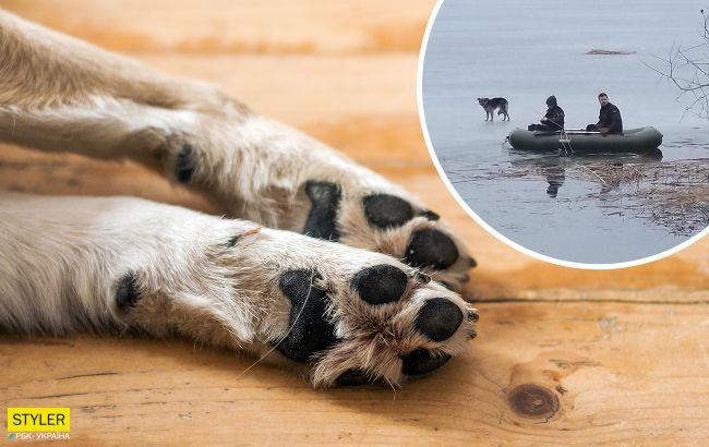Под Харьковом спасли пса, который неделю плавал на льдине без еды
