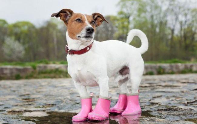 Фото: в Украине преимущественно дожди