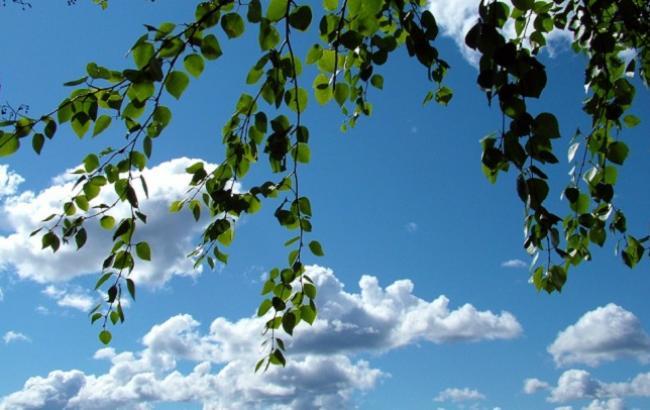 Фото: Береза - один из символов Троицы (pixabay.com/jorisamonen)