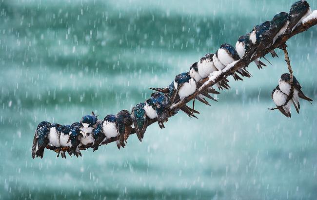Фото: в Україні очікується сніг