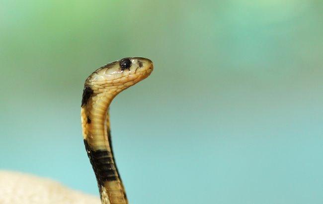 Фото: Змія (unsplash.com/Boris Smokrovic)