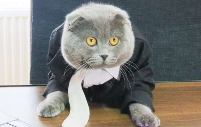 В Румынии кота назначили пиар-менеджером интернет-магазина