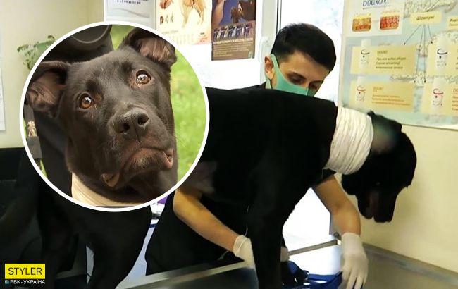 Привязали к дереву цепью и били: киевлянка спасла собаку от живодеров