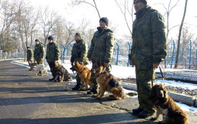 Фото: Собаки (police.dn.ua)