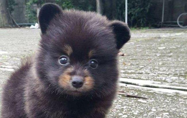 В сети пытаются отгадать, кем является милое животное нафотографии