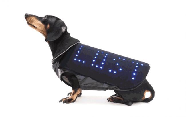 В производство поступает дискожилет для собак