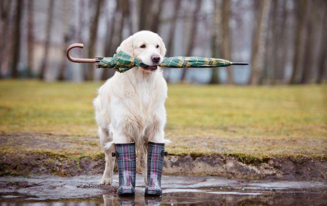 Фото: на заході України очікуються дощі