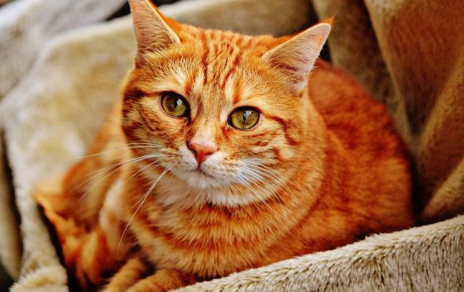 Фото: Кот (pixabay.com)