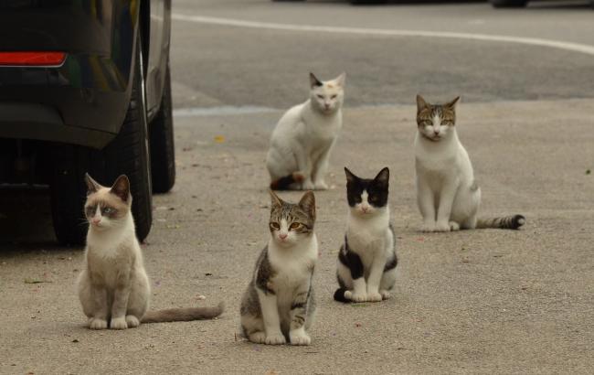 """""""Портят палисадник"""": в Одессе женщина пытается отравить котов, которые ей """"мешают"""""""