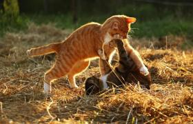 Фото: Коты на солнце (pixabay.com/rihaij)