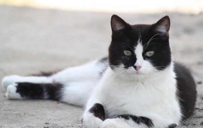 """""""Говорящий"""" кіт, який утамовує спрагу з крана, розчулив користувачів мережі"""