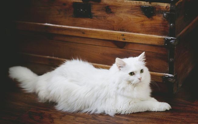 Фото: Кішка (pixabay.com/emilyhopper)