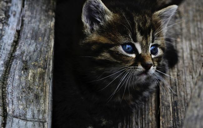 В Донецкой области дети выдавили котенку глаз, играясь с ним