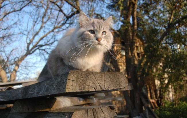 Синоптик дала украинцам неожиданный прогноз на 15 февраля