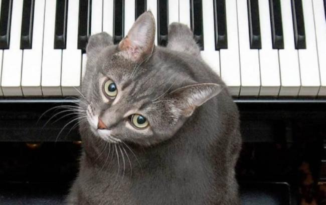 Фото: Кот играет на пианино