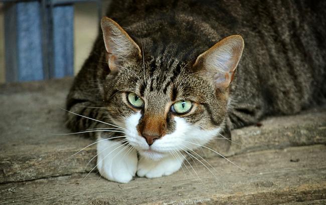 В Мариуполе волонтеры спасли котов от голодной смерти