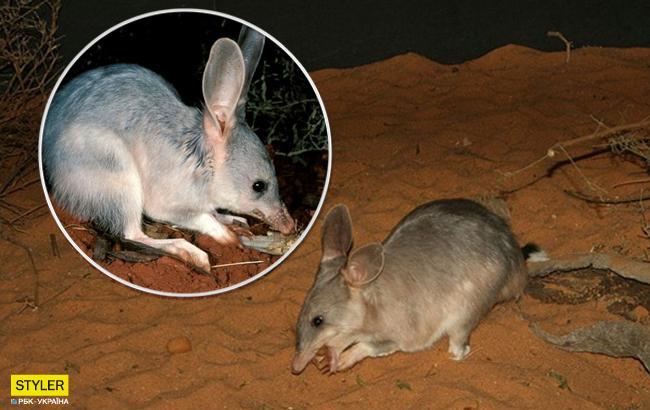 В Австралии в дикую природу выпустили очень редкое млекопитающее