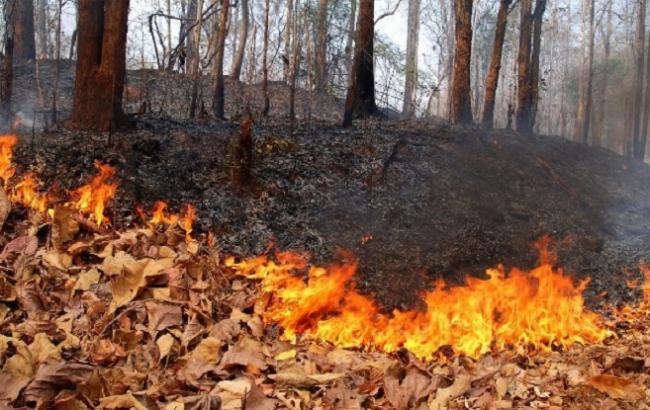 Фото: в Украине ожидается высокий уровень пожарной опасности