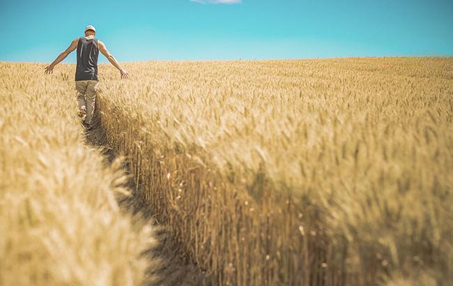 Урожай-2018: украинские аграрии собрали 20 млн тонн зерна
