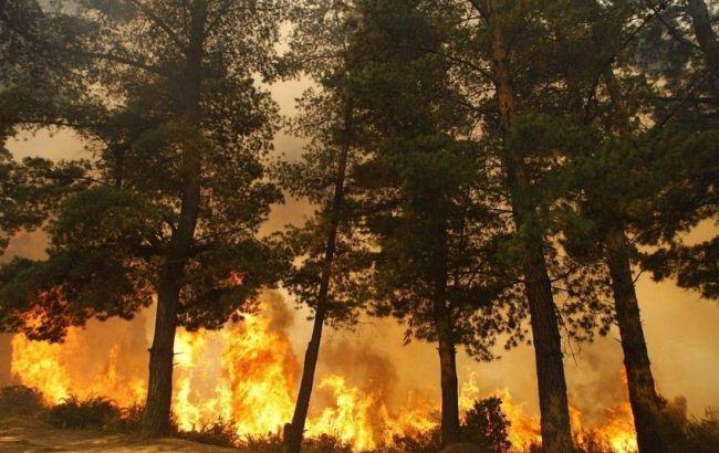 """В Чили из-за пожара объявили """"красный"""" уровень опасности"""
