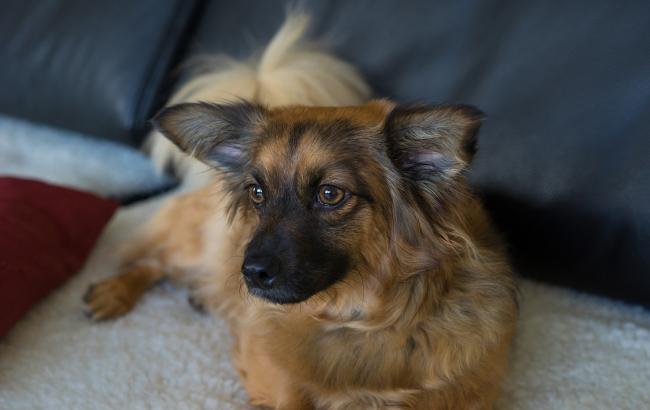 На Донбасі пес врятував господарів ціною власного життя