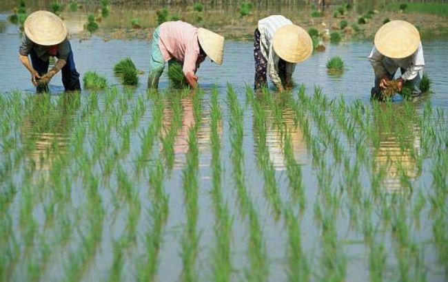 Украина-Китай: перспективы аграрного сотрудничества